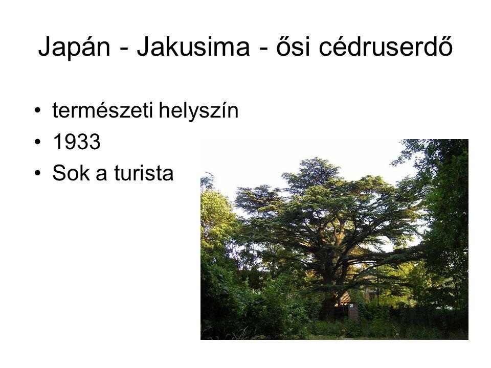 Japán - Jakusima - ősi cédruserdő természeti helyszín 1933 Sok a turista