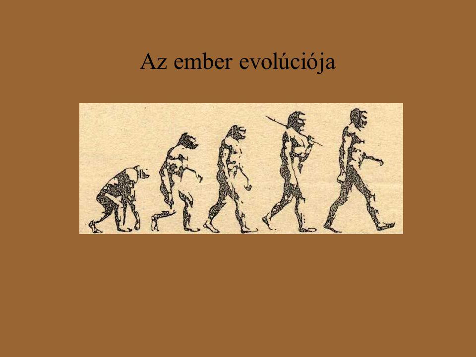 Az ember evolúciója