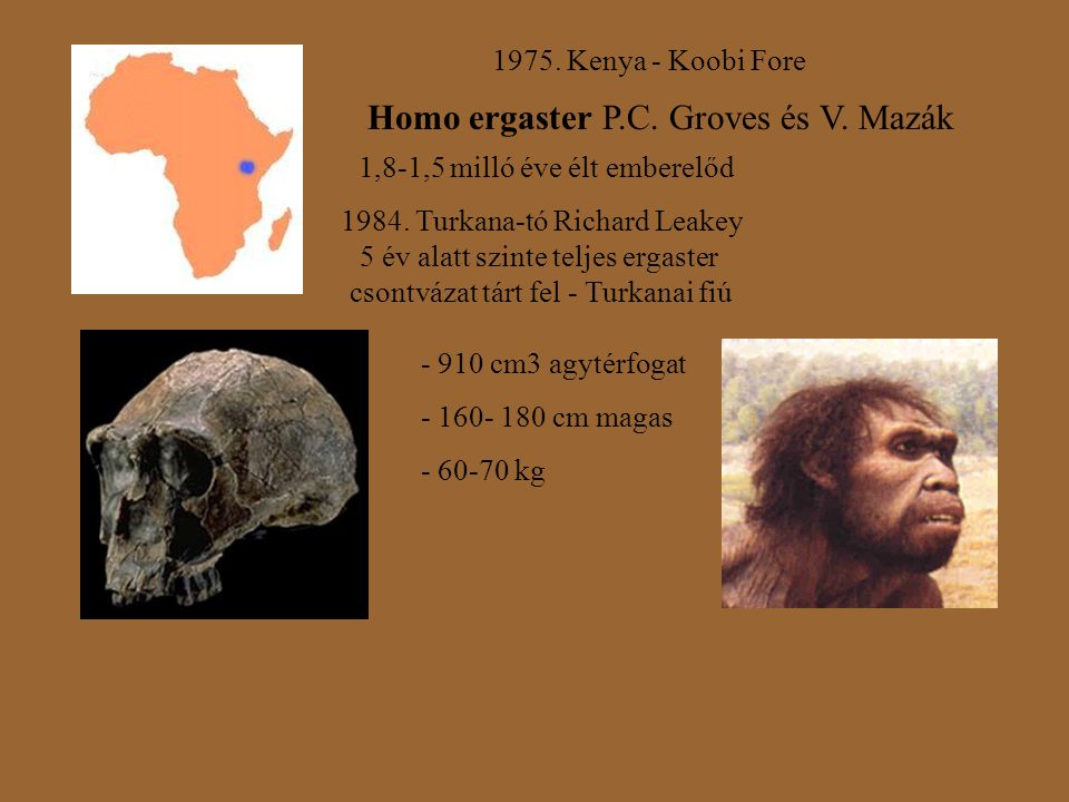 1975. Kenya - Koobi Fore Homo ergaster P.C. Groves és V. Mazák 1,8-1,5 milló éve élt emberelőd 1984. Turkana-tó Richard Leakey 5 év alatt szinte telje