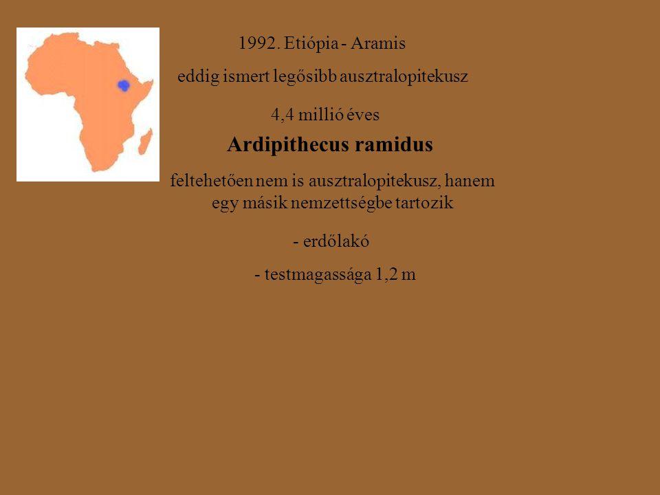1992. Etiópia - Aramis eddig ismert legősibb ausztralopitekusz 4,4 millió éves Ardipithecus ramidus feltehetően nem is ausztralopitekusz, hanem egy má