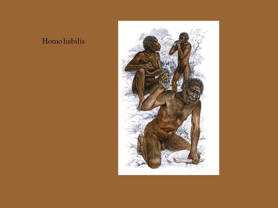 Oligopithecus az oligopithecus leszármazottja lehet a 15 millió éve élt Kenyapithecus a két faj közötti fejlődés egyik oldalágát a gibbonok képviselik Szumátrán él a sziamang kb.