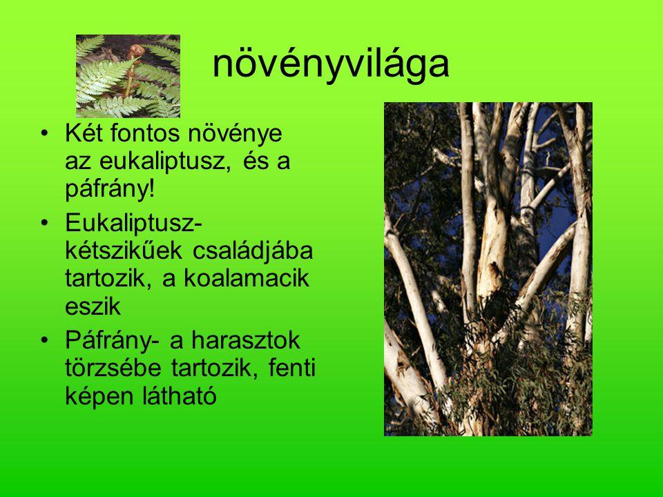 növényvilága Két fontos növénye az eukaliptusz, és a páfrány! Eukaliptusz- kétszikűek családjába tartozik, a koalamacik eszik Páfrány- a harasztok tör
