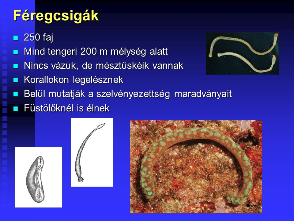 Kagylók n vízi állatok, 8 000 faj n két héjteknő (jobb-bal), többrétegű héj n ha idegen test kerül be, azt a hámsejtek váladéka körülveszi: igazgyöngy n fejsze alakú lábuk van, de fejük nincs n lemezes kopoltyú n fejletlen érzékszervek
