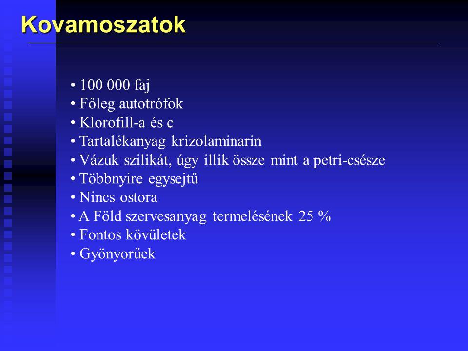 Kovamoszatok 100 000 faj Főleg autotrófok Klorofill-a és c Tartalékanyag krizolaminarin Vázuk szilikát, úgy illik össze mint a petri-csésze Többnyire