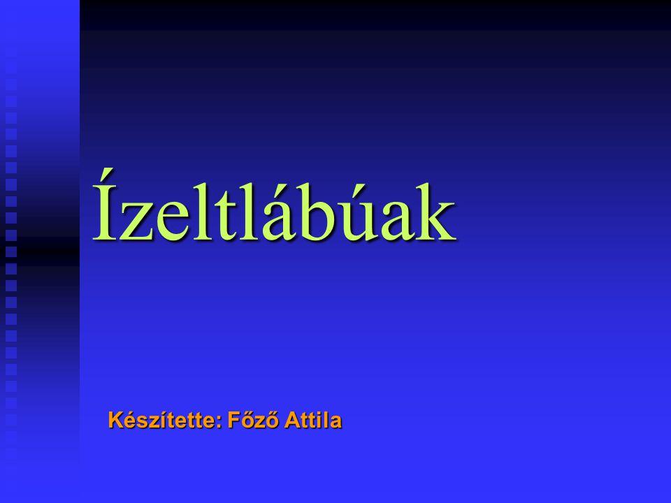 Készítette: Főző Attila Ízeltlábúak