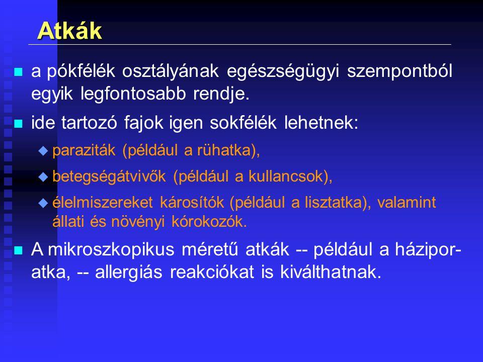 n a pókfélék osztályának egészségügyi szempontból egyik legfontosabb rendje. n ide tartozó fajok igen sokfélék lehetnek: u paraziták (például a rühatk