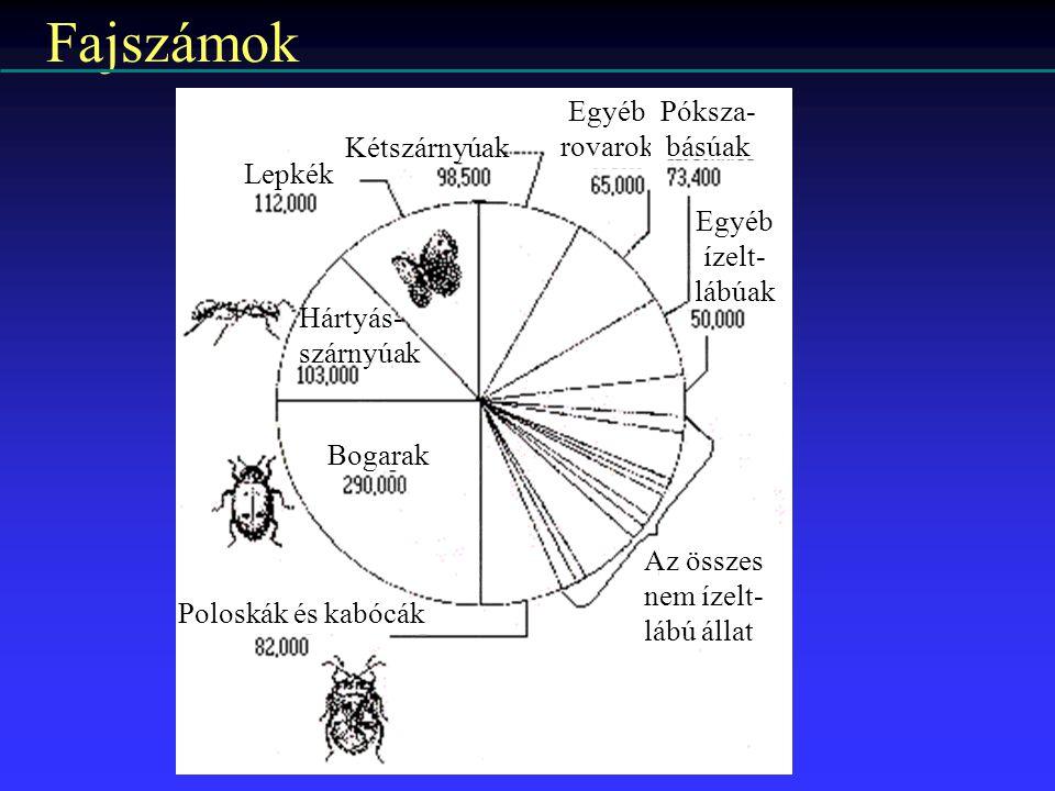 Fajszámok Lepkék Kétszárnyúak Egyéb rovarok Póksza- básúak Egyéb ízelt- lábúak Az összes nem ízelt- lábú állat Poloskák és kabócák Bogarak Hártyás- sz