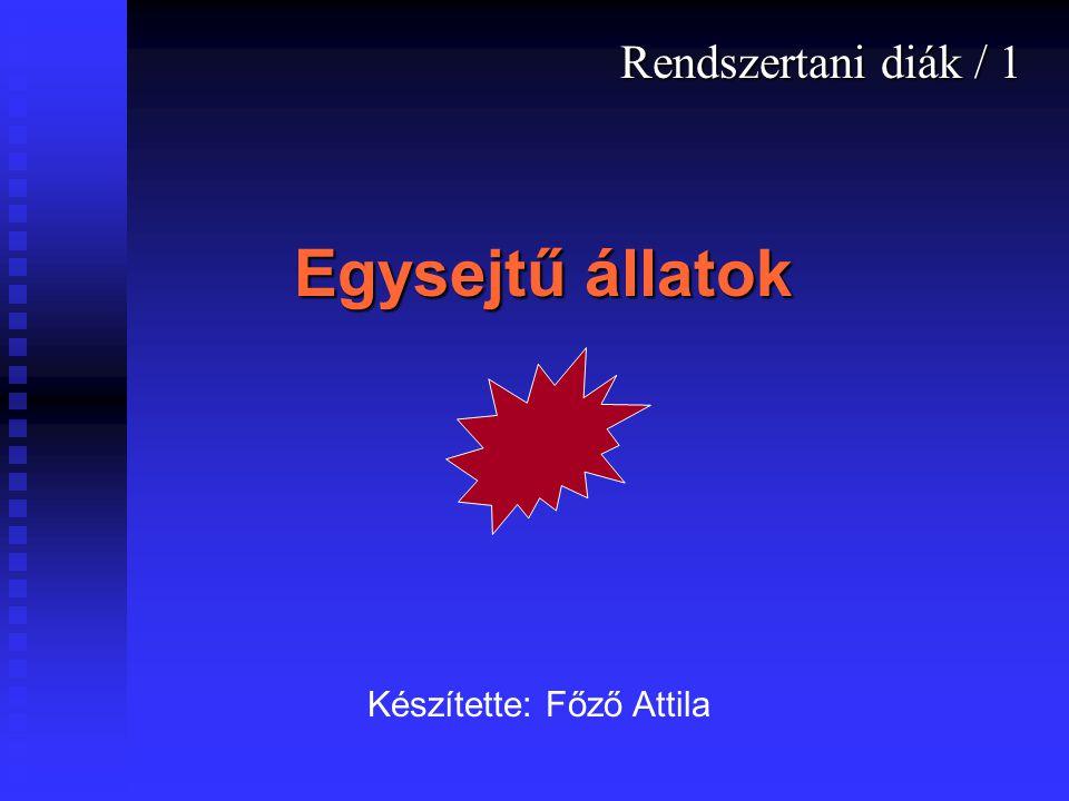 Egysejtű állatok Rendszertani diák / 1 Készítette: Főző Attila