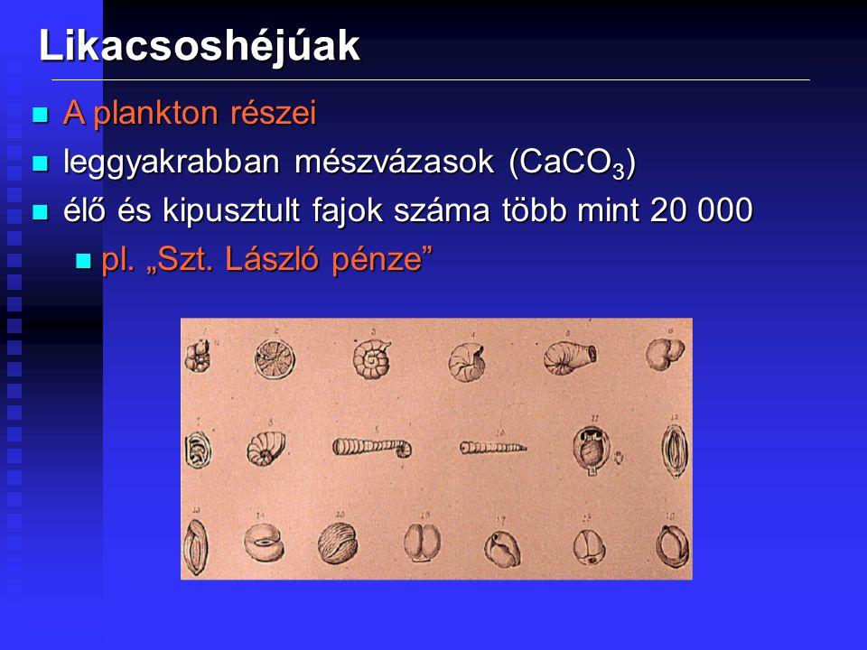 """Likacsoshéjúak n A plankton részei n leggyakrabban mészvázasok (CaCO 3 ) n élő és kipusztult fajok száma több mint 20 000 n pl. """"Szt. László pénze"""""""