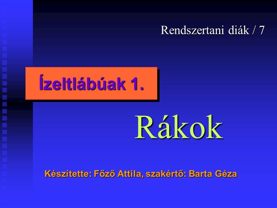 Rendszertani diák / 7 Készítette: Főző Attila, szakértő: Barta Géza Ízeltlábúak 1. Rákok