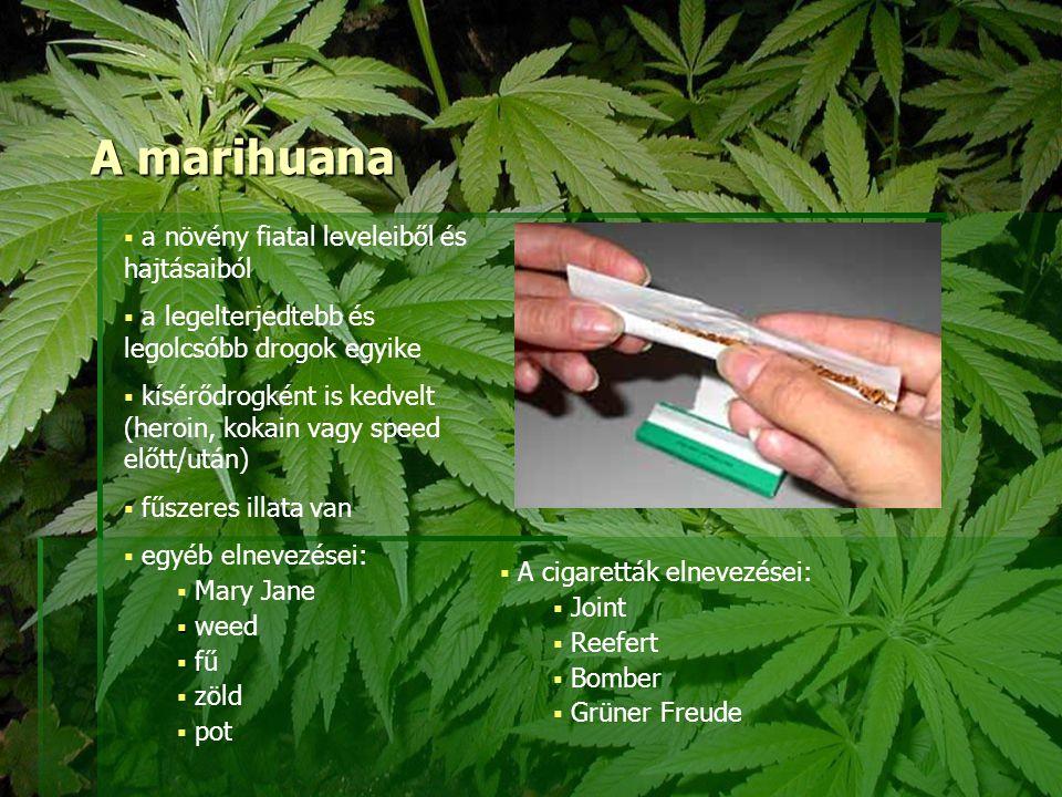A marihuana  a növény fiatal leveleiből és hajtásaiból  a legelterjedtebb és legolcsóbb drogok egyike  kísérődrogként is kedvelt (heroin, kokain va
