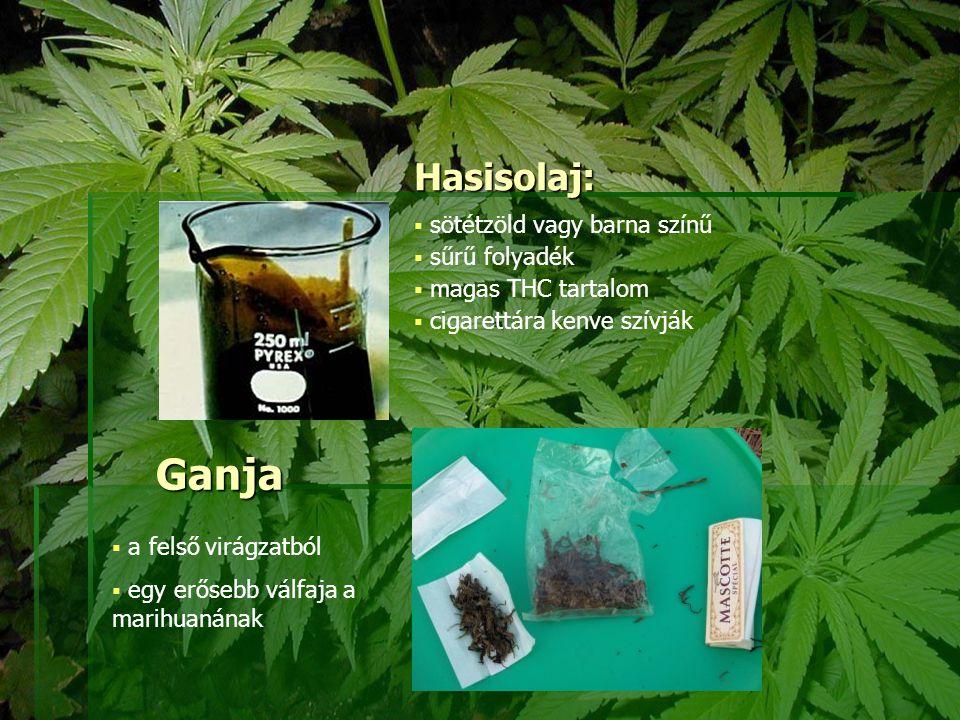 Ganja  a felső virágzatból  egy erősebb válfaja a marihuanának Hasisolaj:  sötétzöld vagy barna színű  sűrű folyadék  magas THC tartalom  cigare