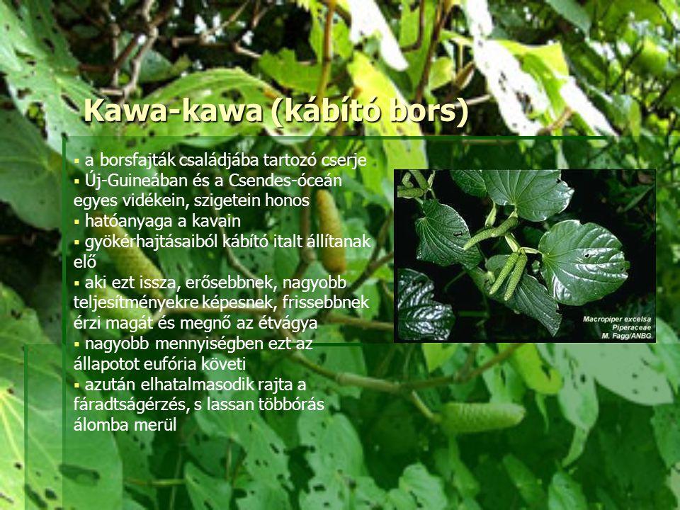 Kawa-kawa (kábító bors)  a borsfajták családjába tartozó cserje  Új-Guineában és a Csendes-óceán egyes vidékein, szigetein honos  hatóanyaga a kava