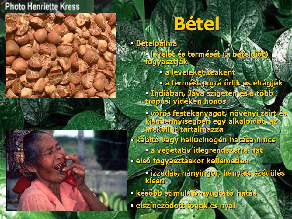 Bétel  Bételpálma  levelét és termését (a bételdiót) fogyasztják  a leveleket teaként  a termést porrá őrlik és elrágják  Indiában, Jáva szigetén