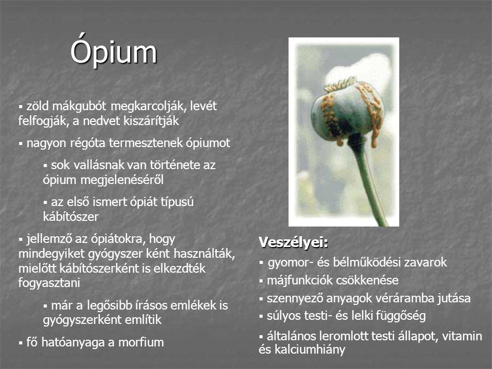Ópium  zöld mákgubót megkarcolják, levét felfogják, a nedvet kiszárítják  nagyon régóta termesztenek ópiumot  sok vallásnak van története az ópium