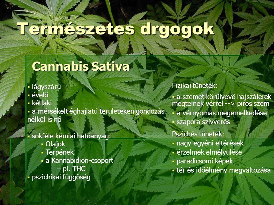 A THC  D9 tetrahydrocannabinol vegyület  a Cannabis Sativa pszichoaktív hatóanyaga  ez felelős a hallucinogén hatásért  lassan ürül ki a szervezetből  nagyobb THC tortalom --> erősebb fű  a gyógyászatban is használatos  több mint 50 féle gyógyhatású anyagot tartalmaz  rákos betegek terápiájában fájdalomcsillapító  A '30-as évekig nem minősült kábítószernek