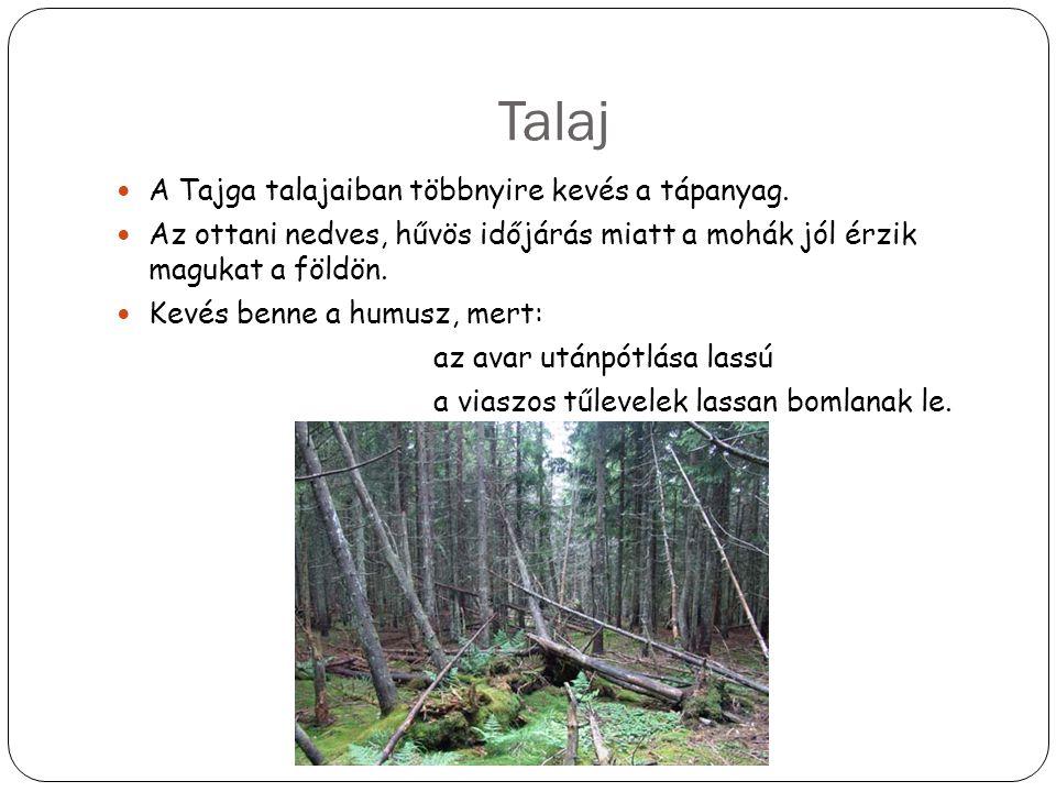 Talaj A Tajga talajaiban többnyire kevés a tápanyag. Az ottani nedves, hűvös időjárás miatt a mohák jól érzik magukat a földön. Kevés benne a humusz,