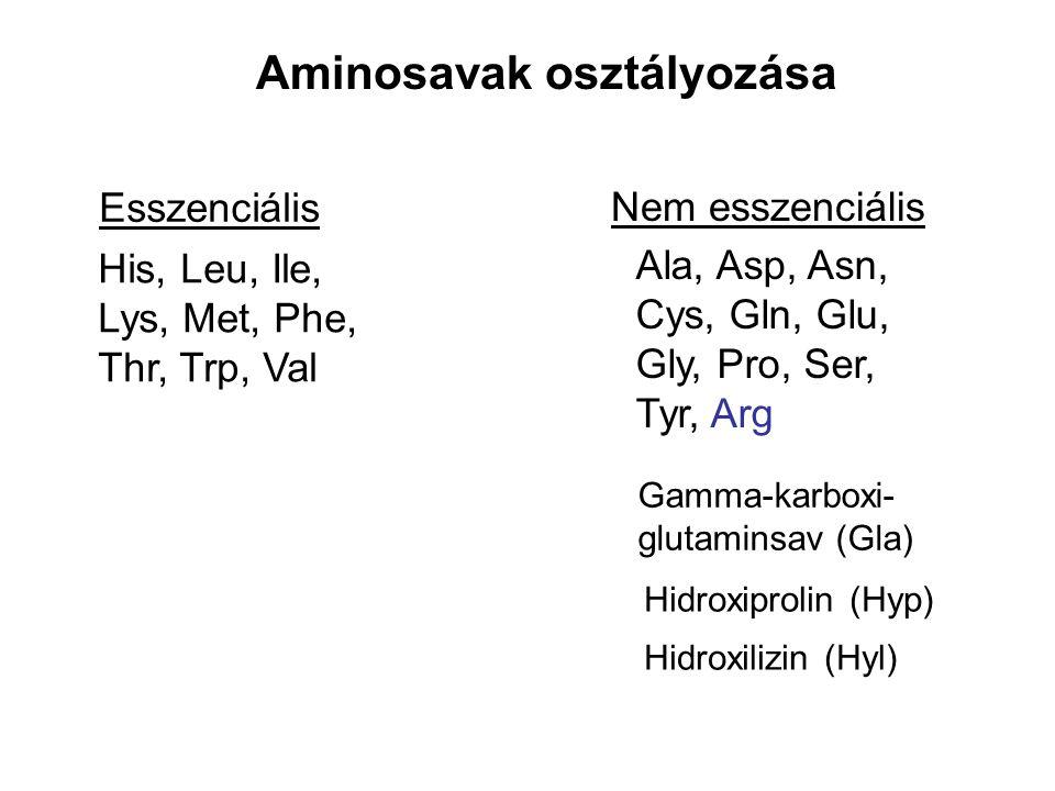 Aminosavak osztályozása Esszenciális Nem esszenciális Ala, Asp, Asn, Cys, Gln, Glu, Gly, Pro, Ser, Tyr, Arg Gamma-karboxi- glutaminsav (Gla) Hidroxipr