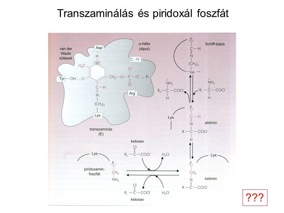 Transzaminálás és piridoxál foszfát ???
