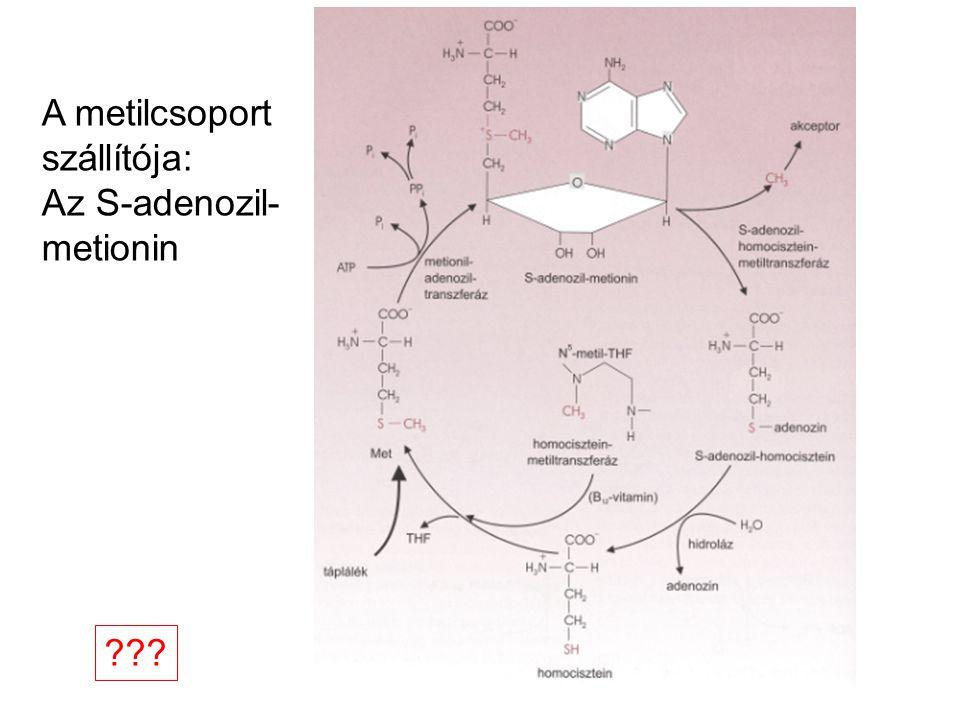 A metilcsoport szállítója: Az S-adenozil- metionin ???