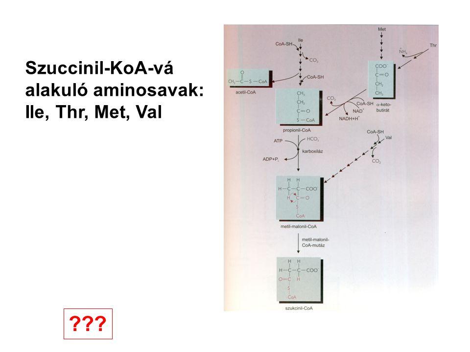 Szuccinil-KoA-vá alakuló aminosavak: Ile, Thr, Met, Val ???