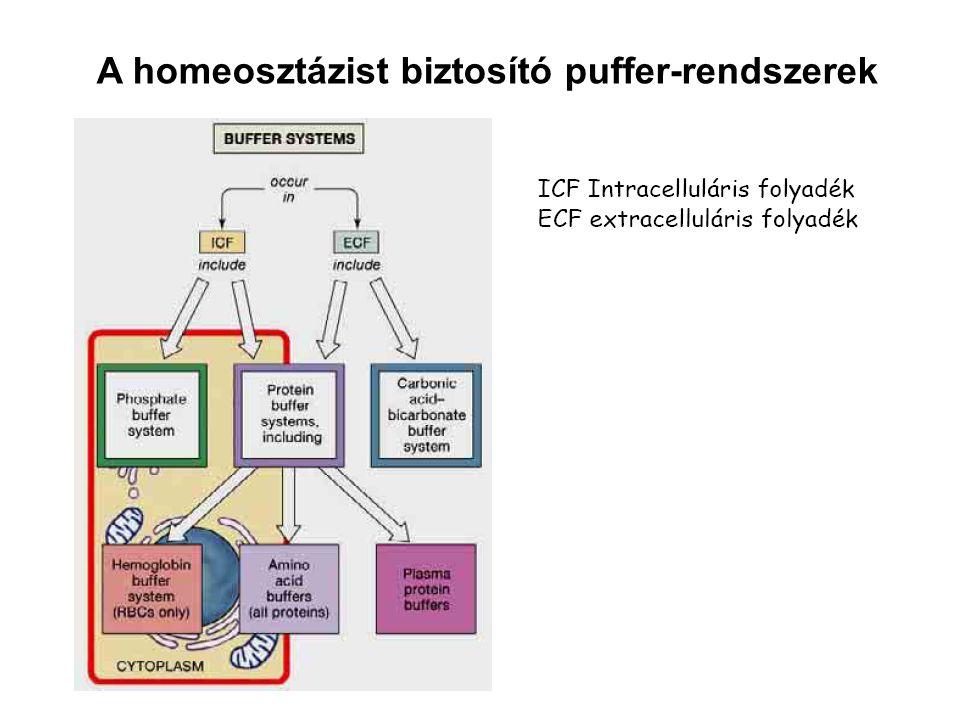 A homeosztázist biztosító puffer-rendszerek