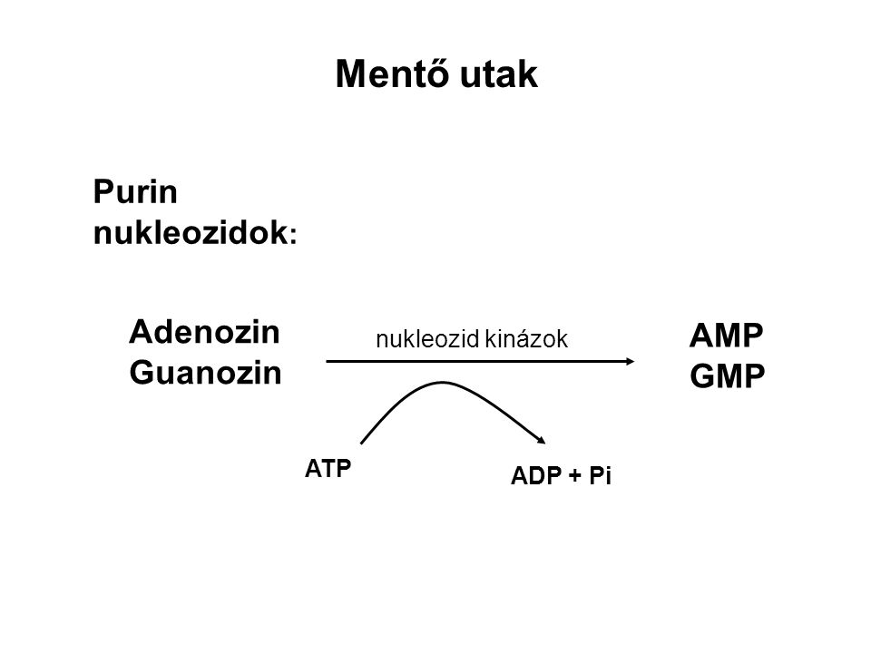 Mentő utak Purin nukleozidok : Adenozin Guanozin nukleozid kinázok AMP GMP ATP ADP + Pi