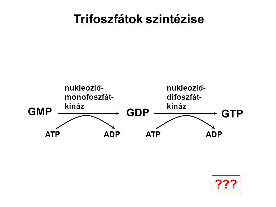 GMP GDP GTP ATPADP ATP ADP nukleozid- monofoszfát- kináz nukleozid- difoszfát- kináz Trifoszfátok szintézise ???