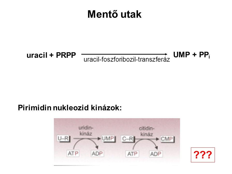 Mentő utak Pirimidin nukleozid kinázok: uracil + PRPP UMP + PP i uracil-foszforibozil-transzferáz ???