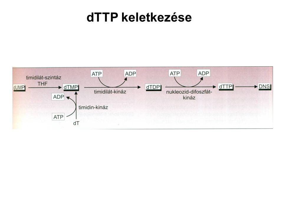 dTTP keletkezése
