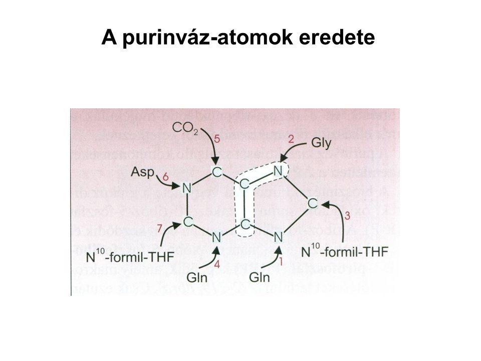 A purinváz-atomok eredete