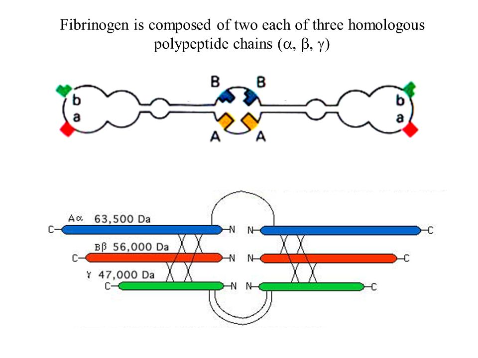 Fibrinogen is composed of two each of three homologous polypeptide chains (  )