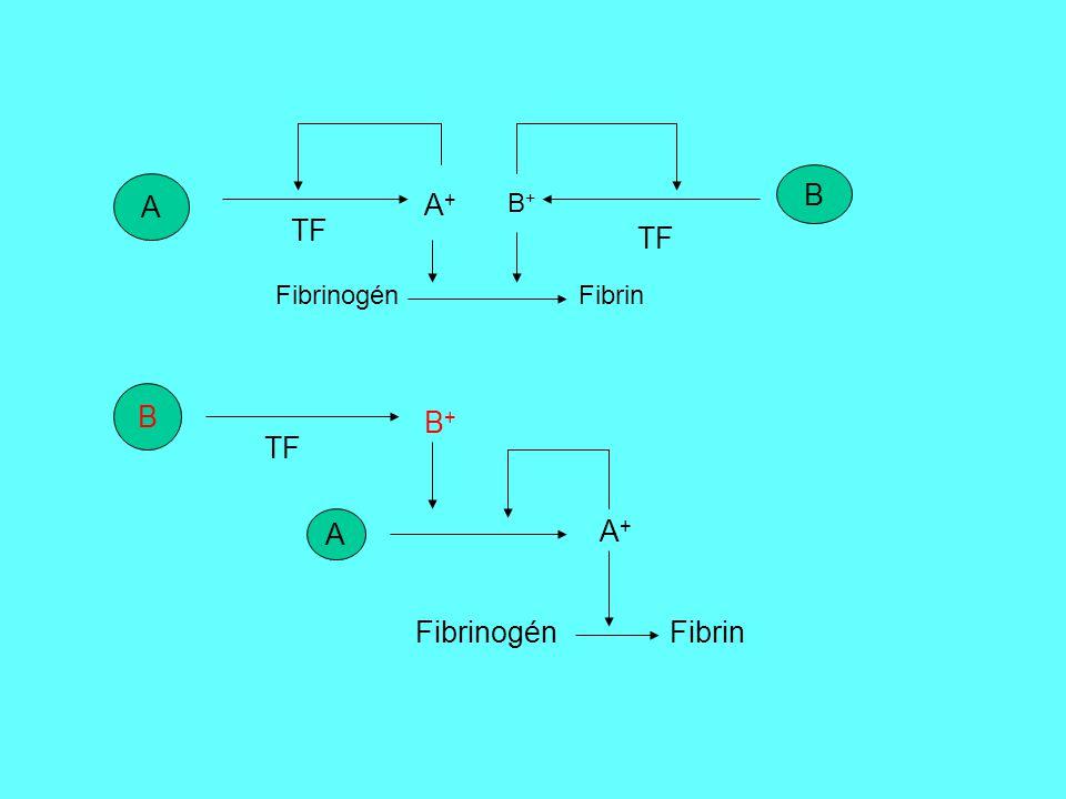 A A+A+ TF Fibrinogén Fibrin B+B+ B TF B B+B+ A A+A+ Fibrinogén Fibrin