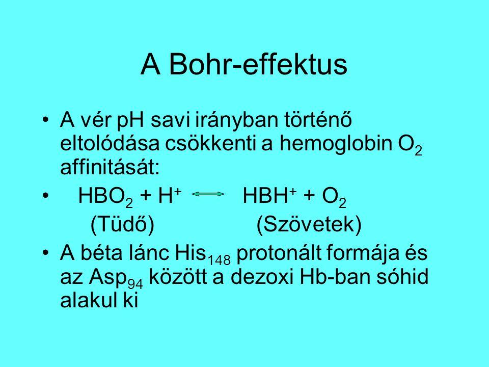 A Bohr-effektus A vér pH savi irányban történő eltolódása csökkenti a hemoglobin O 2 affinitását: HBO 2 + H + HBH + + O 2 (Tüdő) (Szövetek) A béta lánc His 148 protonált formája és az Asp 94 között a dezoxi Hb-ban sóhid alakul ki