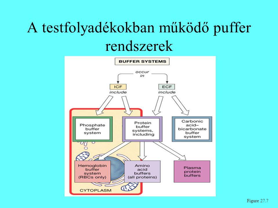 A testfolyadékokban működő puffer rendszerek Figure 27.7