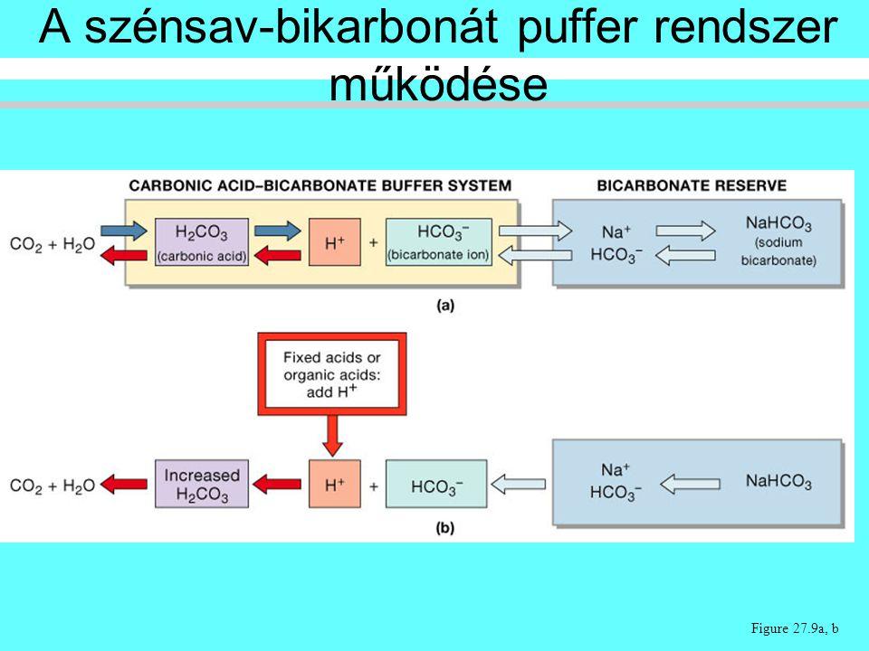 Figure 27.9a, b A szénsav-bikarbonát puffer rendszer működése
