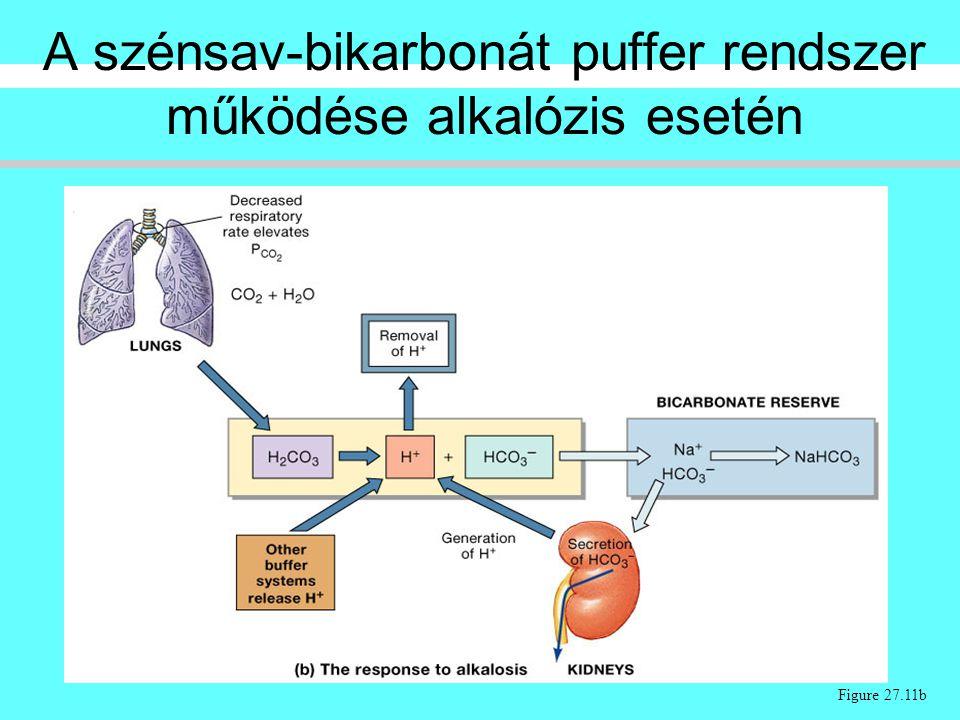 Figure 27.11b A szénsav-bikarbonát puffer rendszer működése alkalózis esetén