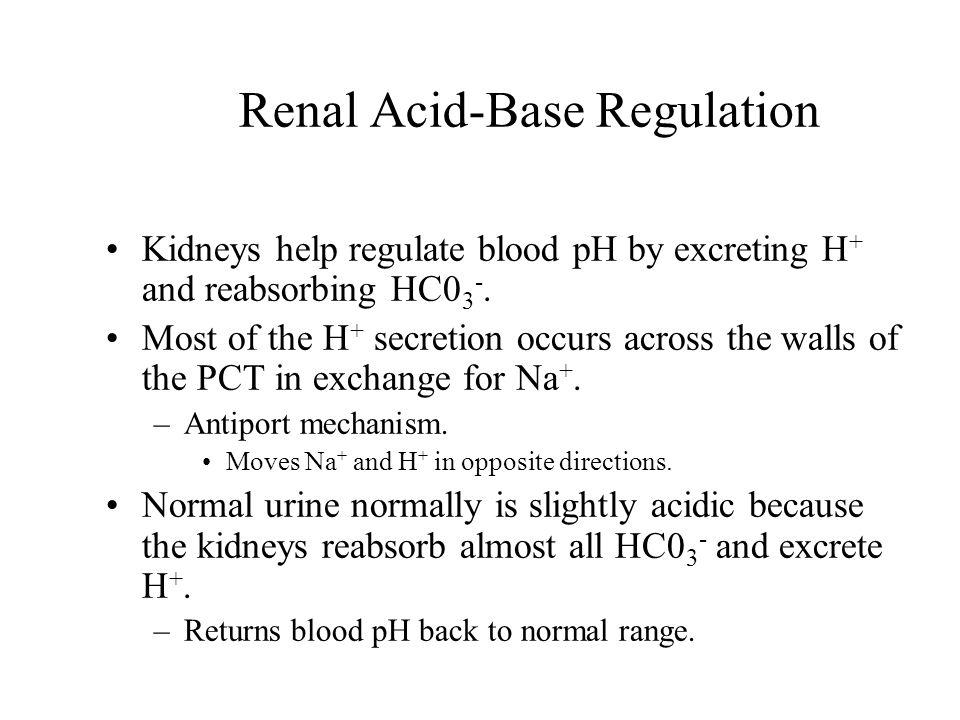 Renal Acid-Base Regulation Kidneys help regulate blood pH by excreting H + and reabsorbing HC0 3 -.