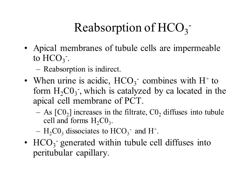 Reabsorption of HCO 3 - Apical membranes of tubule cells are impermeable to HCO 3 -. –Reabsorption is indirect. When urine is acidic, HCO 3 - combines