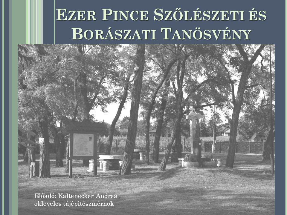 E ZER P INCE S ZŐLÉSZETI ÉS B ORÁSZATI T ANÖSVÉNY ELŐZMÉNYEI Strázsahegy elhelyezkedése, adottságai Tájékoztató és útbaigazító táblarendszer és kijelölt sétálásra, kirándulásra alkalmas útvonal hiánya Agrármarketing Centrum pályázati felhívása (2008) Monor Környéki Strázsa Borrend közös pályázata Duna Borrégió Borút Egyesület Csongrádi hegyközség tanácsa A tanösvény a Nemzeti Bormarketing Program és az Agrármarketing Centrum támogatásával valósult meg.