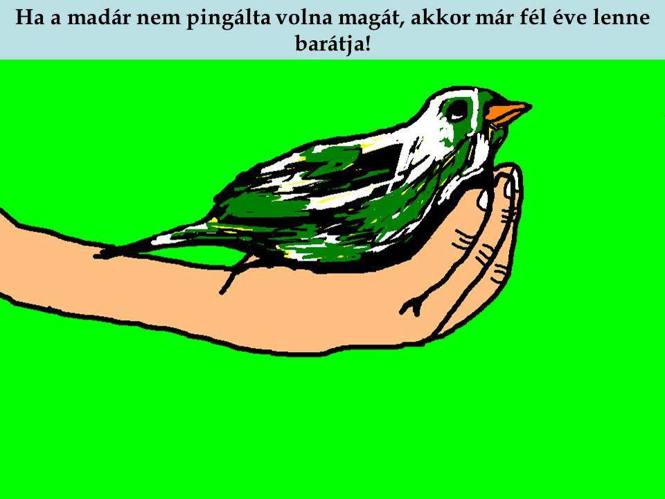 A madár könnye lemosta a festéket, és a tollán ott voltak a zöld, fehér, és más színű festéknyomok. Ha a madár nem pingálta volna magát, akkor már fél