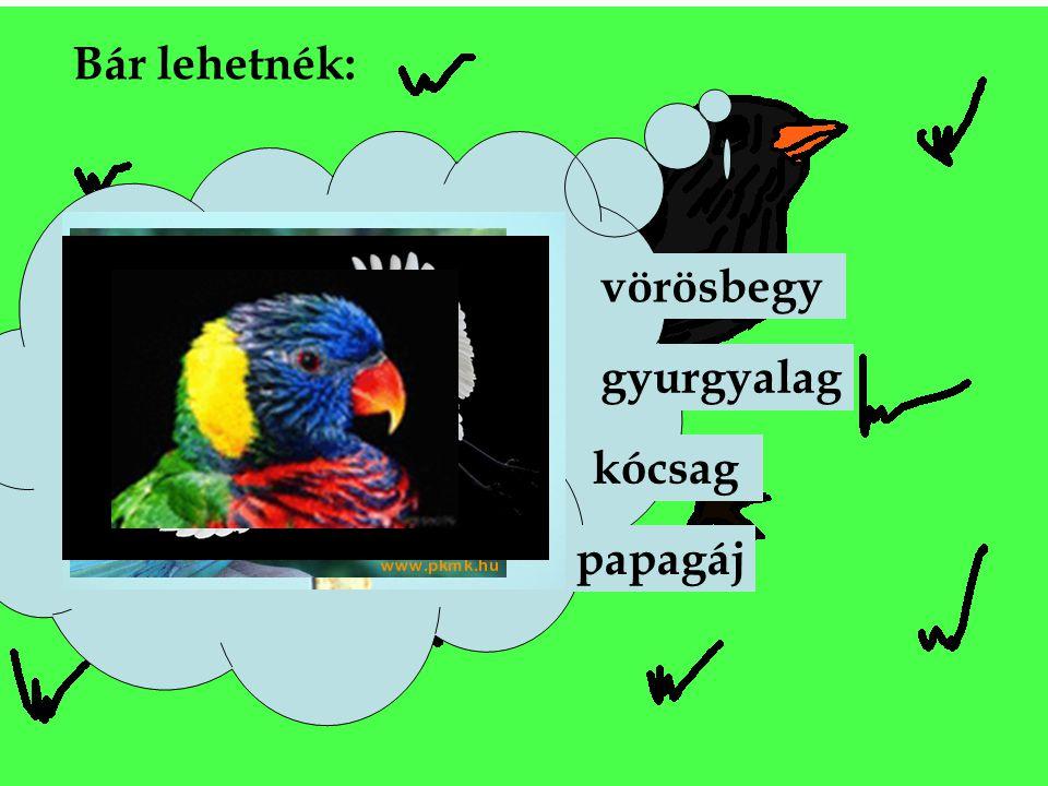 Bár lehetnék: vörösbegy gyurgyalag kócsag papagáj