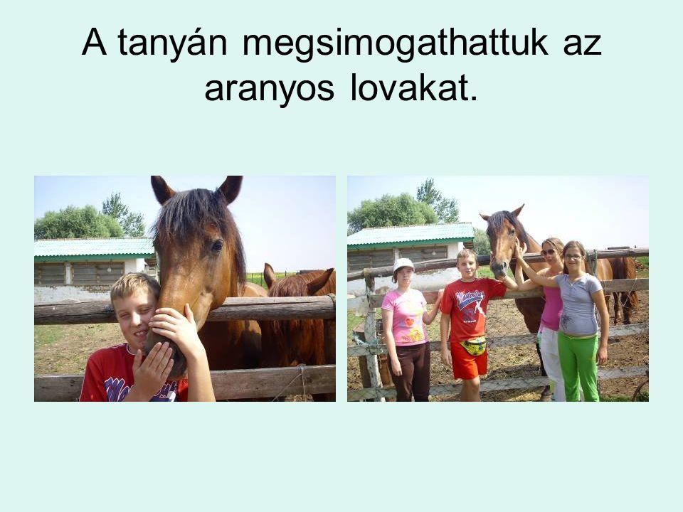 A tanyán megsimogathattuk az aranyos lovakat.