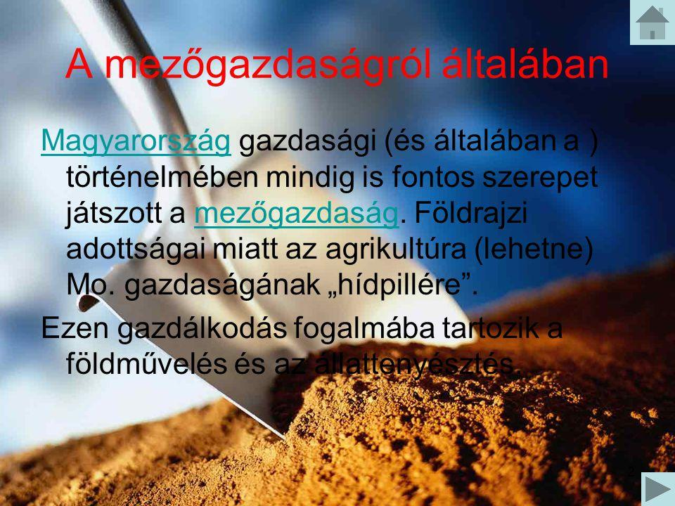 2 A mezőgazdaságról általában MagyarországMagyarország gazdasági (és általában a ) történelmében mindig is fontos szerepet játszott a mezőgazdaság. Fö