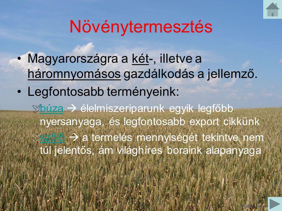 4 Növénytermesztés Magyarországra a két-, illetve a háromnyomásos gazdálkodás a jellemző. Legfontosabb terményeink:  búza  élelmiszeriparunk egyik l