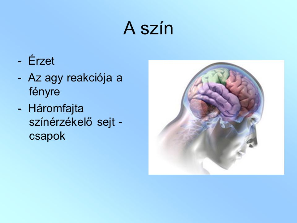 A szín - Érzet - Az agy reakciója a fényre - Háromfajta színérzékelő sejt - csapok