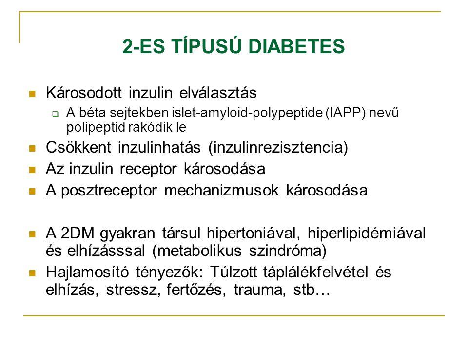2-ES TÍPUSÚ DIABETES Károsodott inzulin elválasztás  A béta sejtekben islet-amyloid-polypeptide (IAPP) nevű polipeptid rakódik le Csökkent inzulinhat