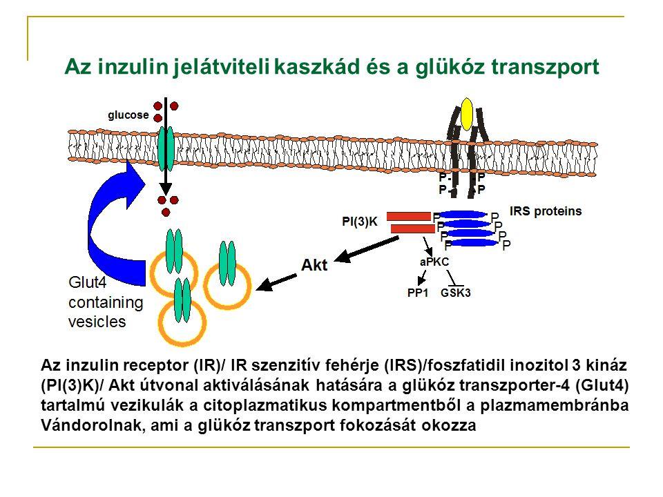 Az inzulin jelátviteli kaszkád és a glükóz transzport Az inzulin receptor (IR)/ IR szenzitív fehérje (IRS)/foszfatidil inozitol 3 kináz (PI(3)K)/ Akt