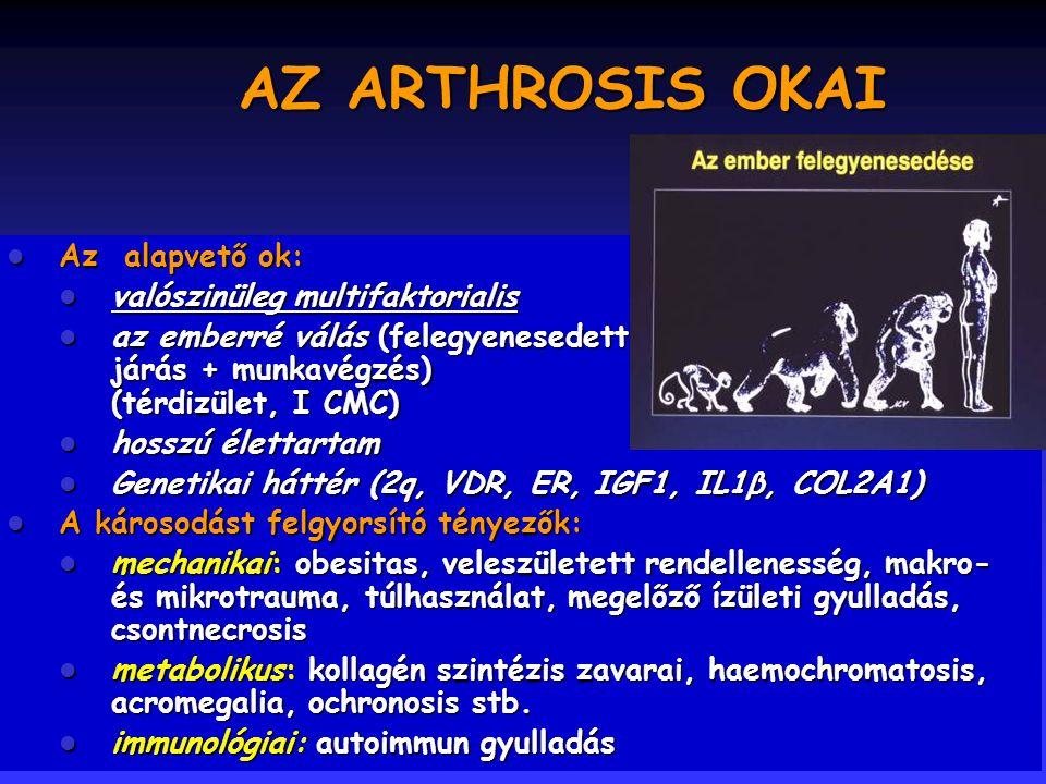 27 Terápia: gyógyszeres Chondroprotektív szerek: –Parenteralis: Rumalon (GAG- peptid complex), Arteparon (glucosamin-polysulphate) –Orális: DONA (glucosamin sulphate), Chondrosulf (chondroitin sulphate) Feltételezett hatásmechanizmus: 1.Proteoglikán szintézis fokozása (chondrocyta) 2.Leukocyta elasztáz (porc degradáció) gátlása 3.Superoxid gyök képződés gátlása 4.iNOS gátlása 5.Chondrocyta messenger RNS szintézis fokozása (reparáció?) Ann Intern Med 2000; 133:726-737 (NIH Conference) Osteoarthritis Cartilage 1998; 6:427-434
