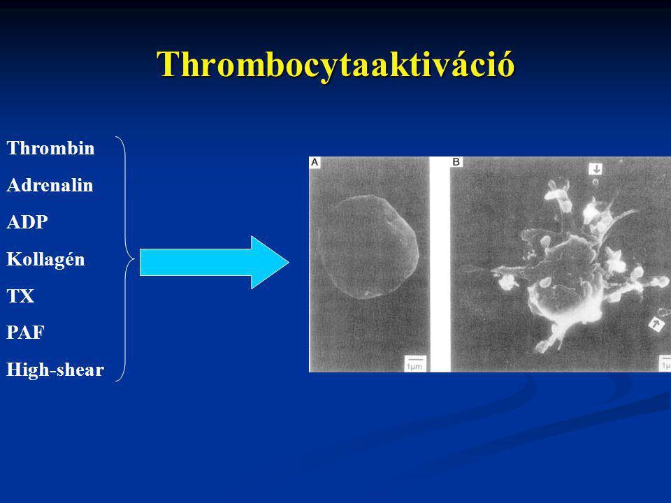 Thrombin Adrenalin ADP Kollagén TX PAF High-shear Thrombocytaaktiváció
